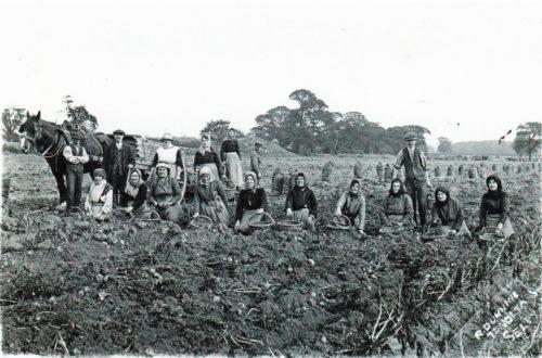 Postcard of Mount Farm c 1920s Potato Picking