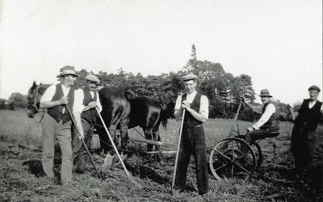 Farm Hands at Bridge Farm Escrick, 1931 – Cutting crops with horse drawn crop cutter