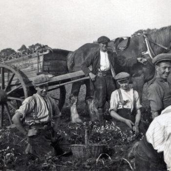 Potato Harvest at Mount Farm Escrick 1933