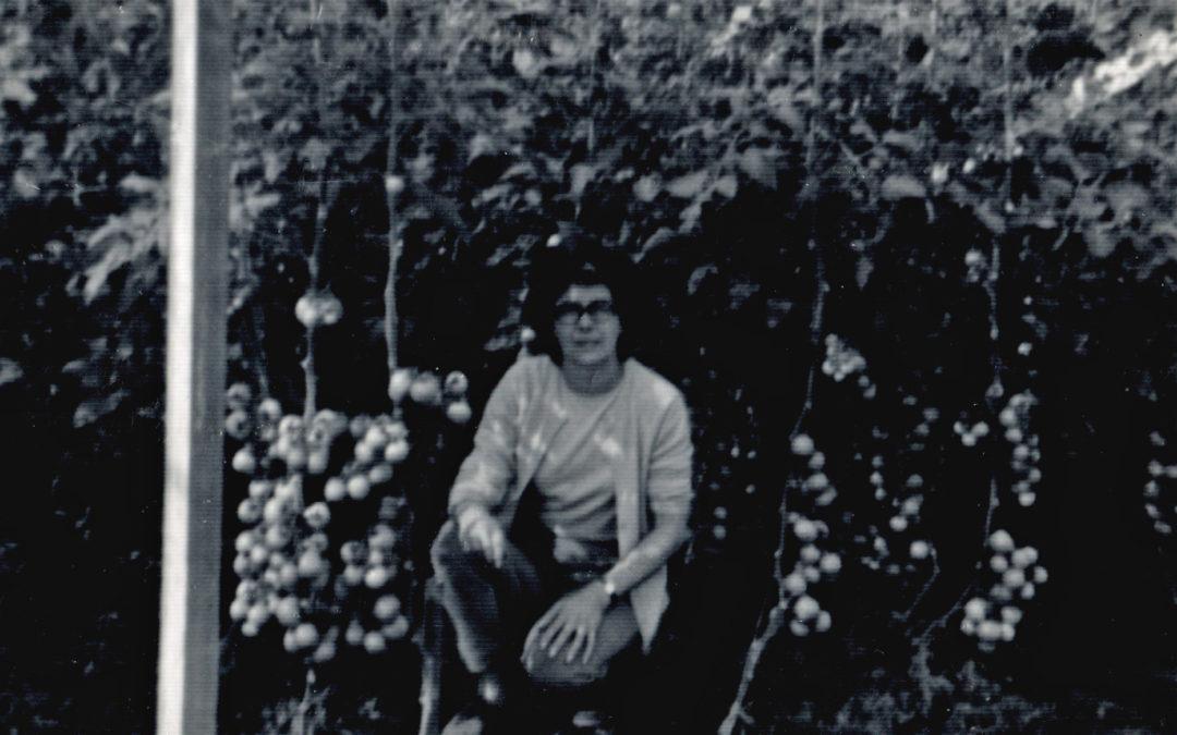 Violet Sarginson (c 1960) Tomato grower