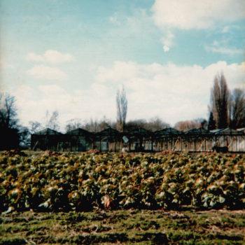 Sarginson's Sprout Field