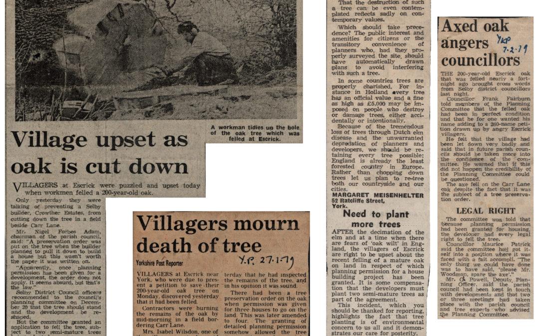 Village in uproar as oak tree cut down – January & February 1979