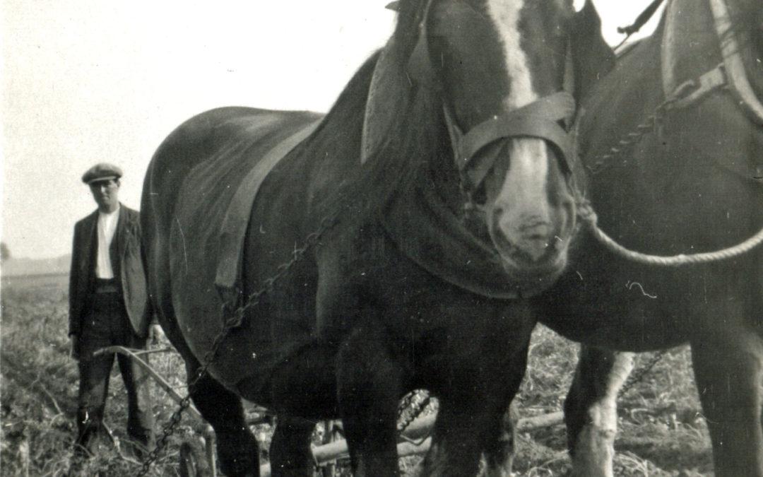 Herbert Tomlinson ploughing at Mount Farm Escrick – 1936/1937