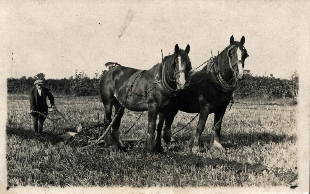 Postcard of Sefton Tomlinson (Jnr) Ploughing at Mount Farm Escrick