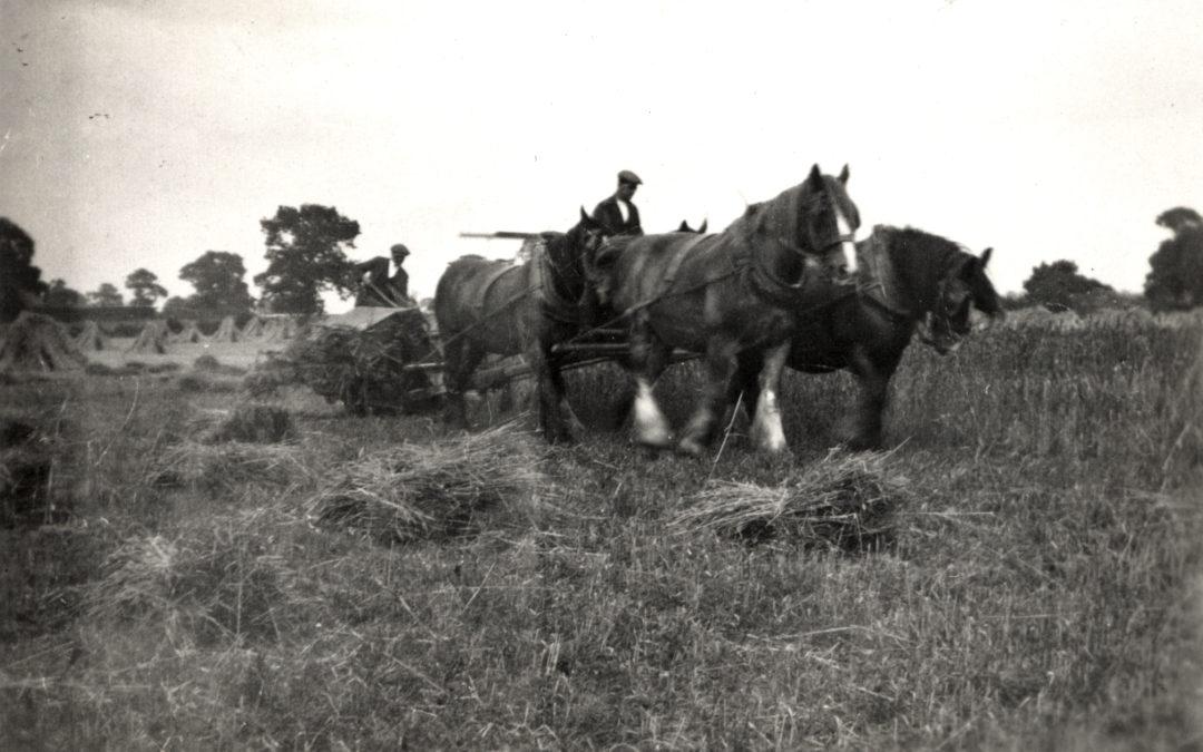 Herbert Tomlinson gathering the crops at Mount Farm Escrick