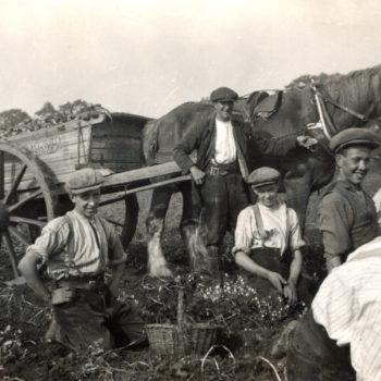 Sefton Tomlinson (Jnr) & his Tack Gang potato picking at Mount Farm Escrick