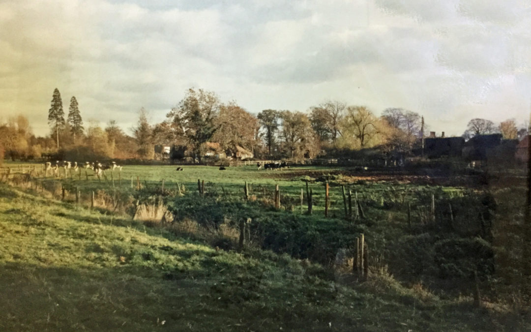 Cow field, now Carrs Meadow and Escrick Village Green
